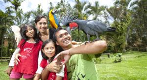 Bali-Bird-Park-Parc-Oiseaux-Bali-Activite-Bali-126